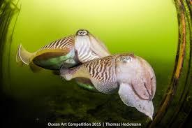 ocean art contest winners underwater photography guide wedding dance of the north sea elves