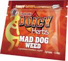 mad-dog weed