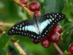 reiman gardens iowa state university ames iowa butterfly house