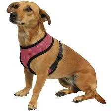 Small Paws & Pals <b>Pet Control Harness</b> for Dog & Cat Easy Soft ...
