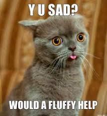 y-u-sad-would-a-fluffy-help-thumb.jpg via Relatably.com