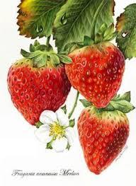 89 Best <b>Strawberry</b> tattoo images   <b>Strawberry</b> tattoo, <b>Strawberry</b> ...