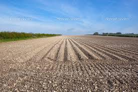 Resultado de imagen de suelos calizos
