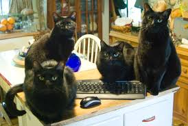 Image result for black cat and computers