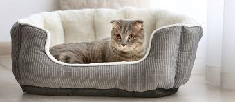 The Best <b>Heated Cat Beds</b> (Review) in 2020   My Pet Needs That