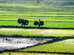 Trại sáng tác về đề tài nông thôn TP.HCM