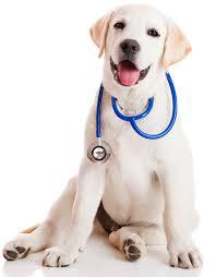 3 τρόποι για να ελέγξετε την υγεία του σκύλου σας...