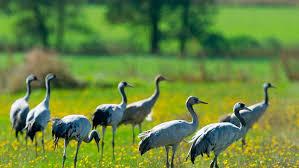 Resultado de imagen para aves migratorias