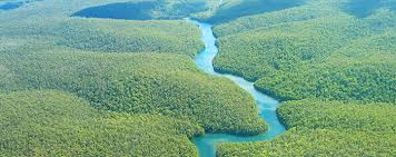 Image result for amazon river