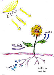 photosynthesis explained with a diagramsimple photosynthesis diagram