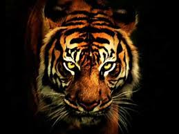 Survivor - <b>Eye Of The</b> Tiger - YouTube