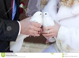 <b>Kiss</b> of <b>white pigeons</b> stock image. Image of outdoors, tuxedo ...
