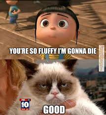 FunnyMemes.com • Cat memes - You're so fluffy I'm gonna die via Relatably.com