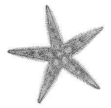essay on starfish more resources about echinoderm the shape of life the story of sea star diversity drawing