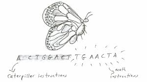 are butterflies two different animals in one the death and are butterflies two different animals in one the death and resurrection theory krulwich wonders npr