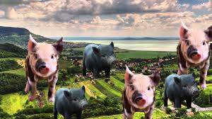 micro pigs and the pros and cons of gmo pets micro pigs and the pros and cons of gmo pets