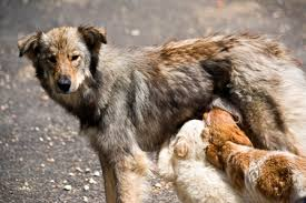 Resultado de imagem para animais de ruas