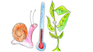 <b>Trees On The</b> Move As Temperature Zones Shift 3.8 Feet A Day ...