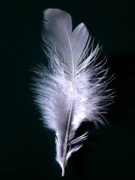 <b>White feather</b> - Wikipedia