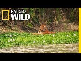 <b>King</b> of the Watering Hole | The <b>Jungle King</b> - YouTube