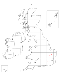 Silene pendula | Online Atlas of the British and Irish Flora