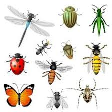 Image result for beneficial insect clipart