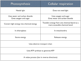 mini essay on photosynthesis  essay essay comparing contrasting photosynthesis respiration for