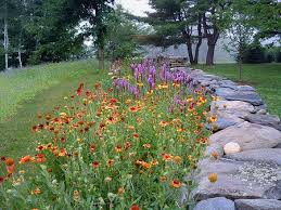 Small Picture 73 best Native Plant Gardening in MI images on Pinterest Native