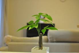 Risultati immagini per piante spoglie