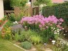 Многолетние кустарники для сада их фото и