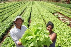 Resultado de imagen para fotos de agricultores labrando la tierra