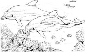 Small Picture coral coloring pages dolphins dolphin coloring pages coral reefs