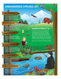 protecting the species act species coalition species act infographic click to enlarge