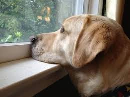 She's been gone for 2 years ... look at her <b>dog's</b> reaction when she ...