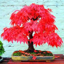 Online Get Cheap <b>Flower</b> Red Blue Yellow -Aliexpress.com ...
