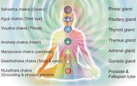 Image result for human glands and chakras
