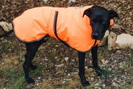 The Best <b>Winter Jackets</b> and Raincoats for <b>Dogs</b> for 2019: Reviews ...