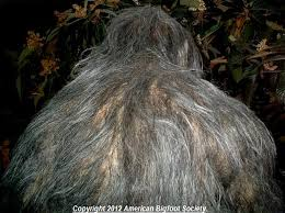 Image result for walking in woods bigfoot femALE
