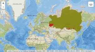 Siberian taimen