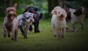 Healthy <b>Dog Treats</b> & Snacks | Raw Diet for <b>Pet's</b> Strong Teeth