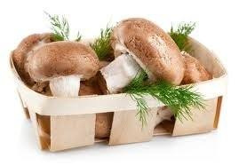 Белые <b>грибы</b> и мицелий купить в Казахстане: цены. Продажа в ...