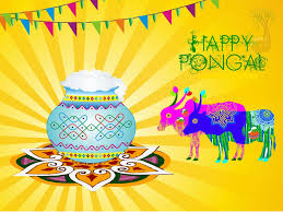 thai pongal festival pongal day quotes sms pongal festival happy pongal 2016 2