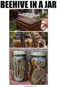 beehive in a jar build diy mason