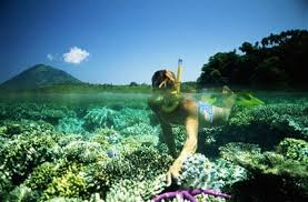 Image result for taman laut bunaken