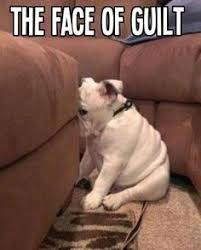 Guilty dogs on Pinterest | Guilty Dog, Maltese and Dogs via Relatably.com