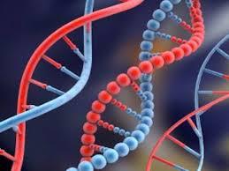 نتيجة بحث الصور عن maladies génétiques et de malformations congénitales