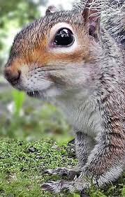 катеричка | животни | <b>Squirrel</b>, Animals, Rodents