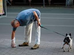 В Мариуполе произошла стрельба из-за собаки, ранен мужчина, - Аброськин - Цензор.НЕТ 2636