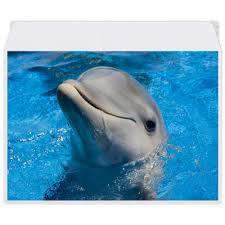 "Конверт средний С5 ""<b>Дельфин</b> 1"" #2556993 от Аня Лукьянова ..."