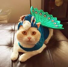 Dog Clothing & Shoes Pet Supplies <b>Pet Cosplay Clothing</b> Peacock ...